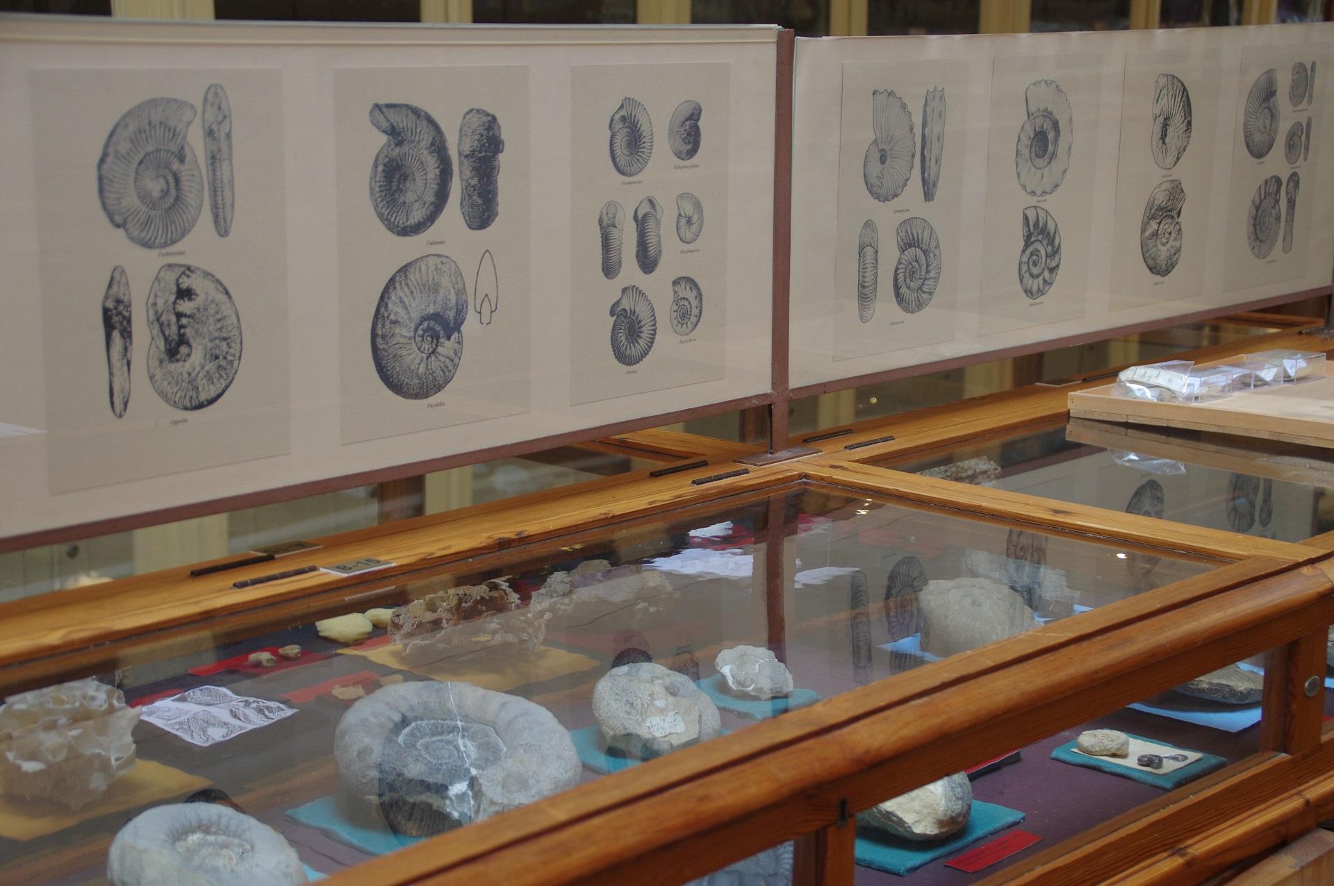 imagem-museu